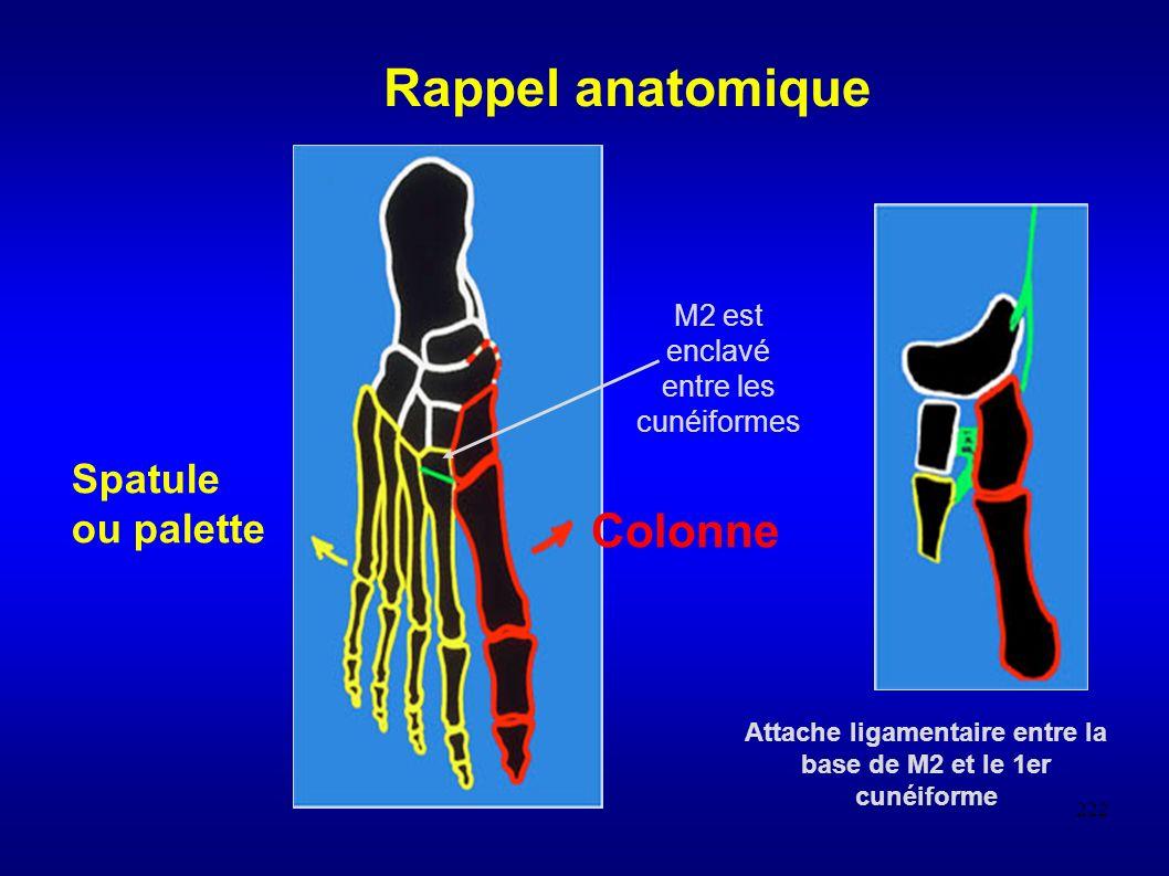 222 Rappel anatomique Spatule ou palette Colonne Attache ligamentaire entre la base de M2 et le 1er cunéiforme M2 est enclavé entre les cunéiformes