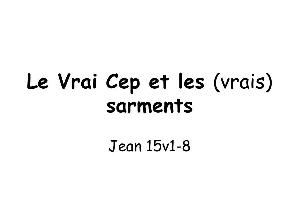 1 er juillet 2012 Le Vrai Cep et les (vrais) sarments Jean 15v1-8