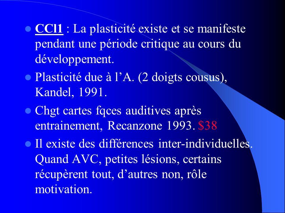 CCl1 : La plasticité existe et se manifeste pendant une période critique au cours du développement. Plasticité due à lA. (2 doigts cousus), Kandel, 19