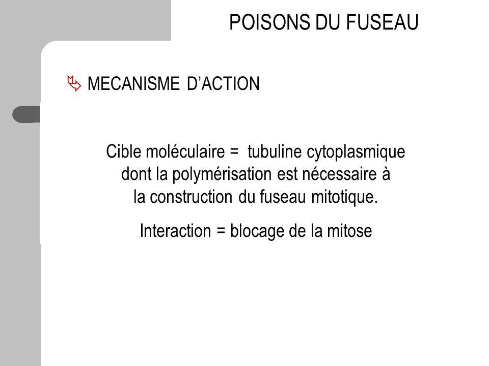 POISONS DU FUSEAU Cible moléculaire = tubuline cytoplasmique dont la polymérisation est nécessaire à la construction du fuseau mitotique. Interaction