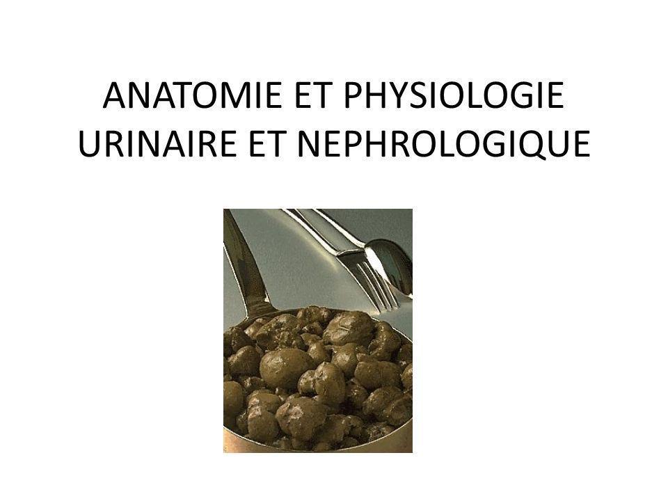 ANATOMIE ET PHYSIOLOGIE URINAIRE ET NEPHROLOGIQUE