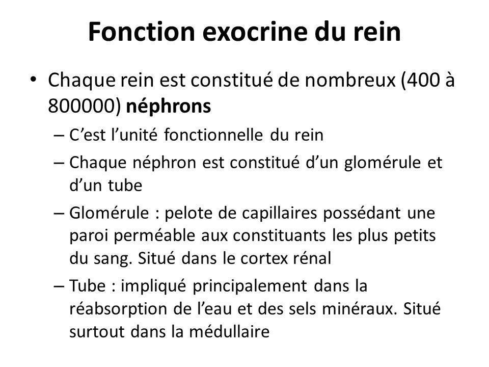 Fonction exocrine du rein Chaque rein est constitué de nombreux (400 à 800000) néphrons – Cest lunité fonctionnelle du rein – Chaque néphron est const