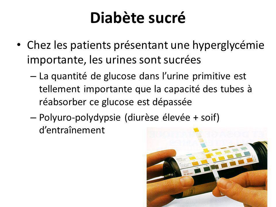 Diabète sucré Chez les patients présentant une hyperglycémie importante, les urines sont sucrées – La quantité de glucose dans lurine primitive est te