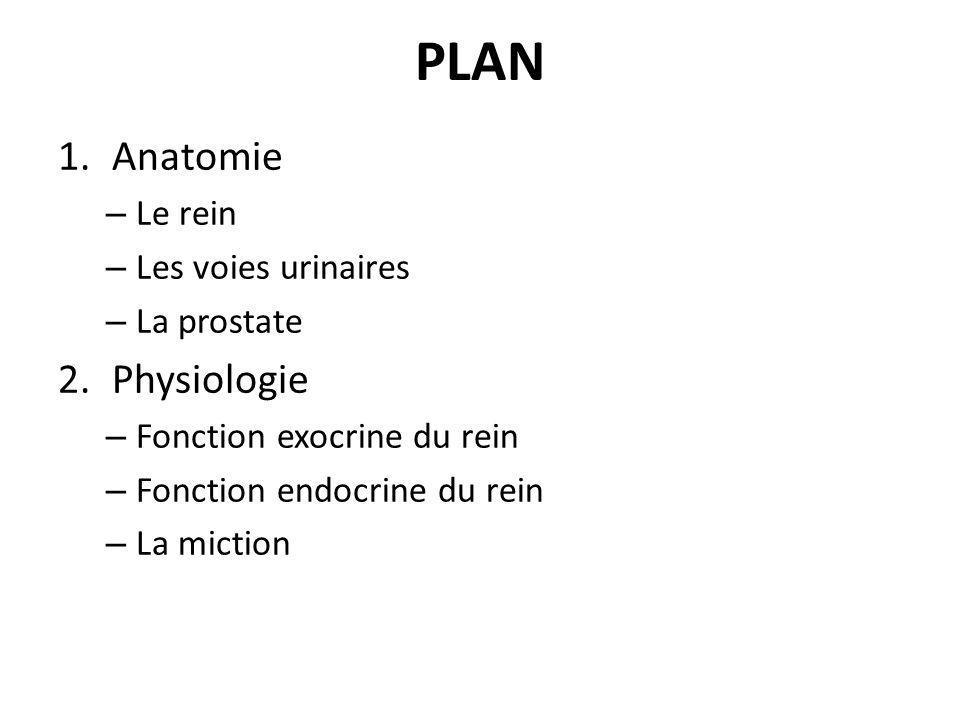 PLAN 1.Anatomie – Le rein – Les voies urinaires – La prostate 2.Physiologie – Fonction exocrine du rein – Fonction endocrine du rein – La miction