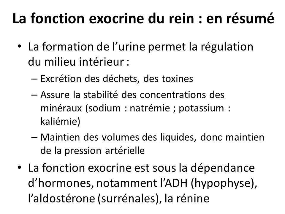 La fonction exocrine du rein : en résumé La formation de lurine permet la régulation du milieu intérieur : – Excrétion des déchets, des toxines – Assu