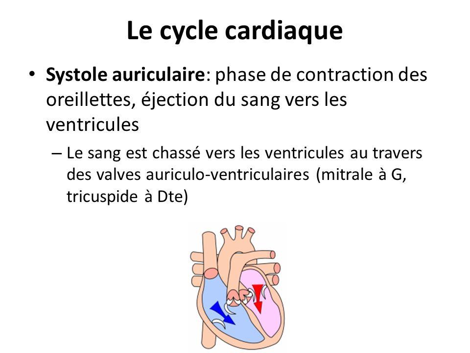 Le cycle cardiaque Systole auriculaire: phase de contraction des oreillettes, éjection du sang vers les ventricules – Le sang est chassé vers les vent