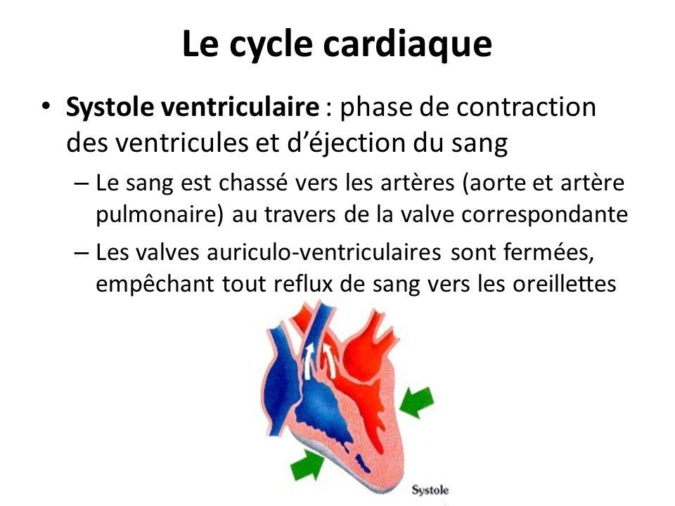 Le cycle cardiaque Systole ventriculaire : phase de contraction des ventricules et déjection du sang – Le sang est chassé vers les artères (aorte et a