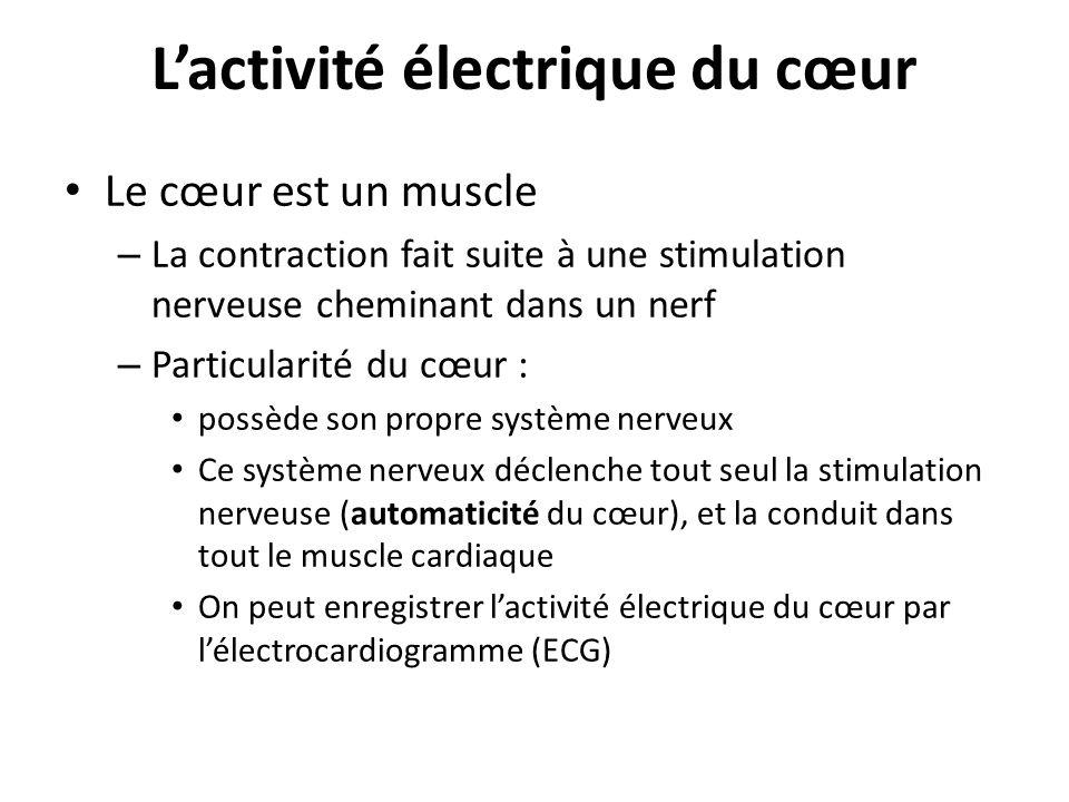 Lactivité électrique du cœur Le cœur est un muscle – La contraction fait suite à une stimulation nerveuse cheminant dans un nerf – Particularité du cœ