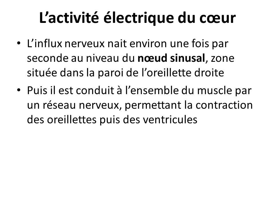 Lactivité électrique du cœur Linflux nerveux nait environ une fois par seconde au niveau du nœud sinusal, zone située dans la paroi de loreillette dro