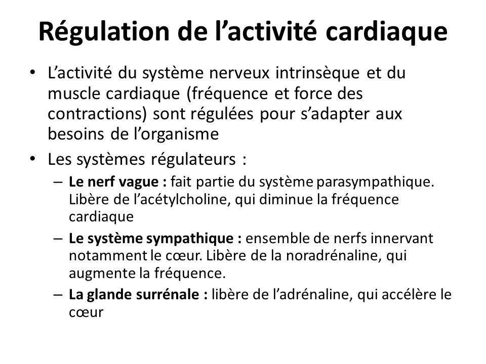 Régulation de lactivité cardiaque Lactivité du système nerveux intrinsèque et du muscle cardiaque (fréquence et force des contractions) sont régulées
