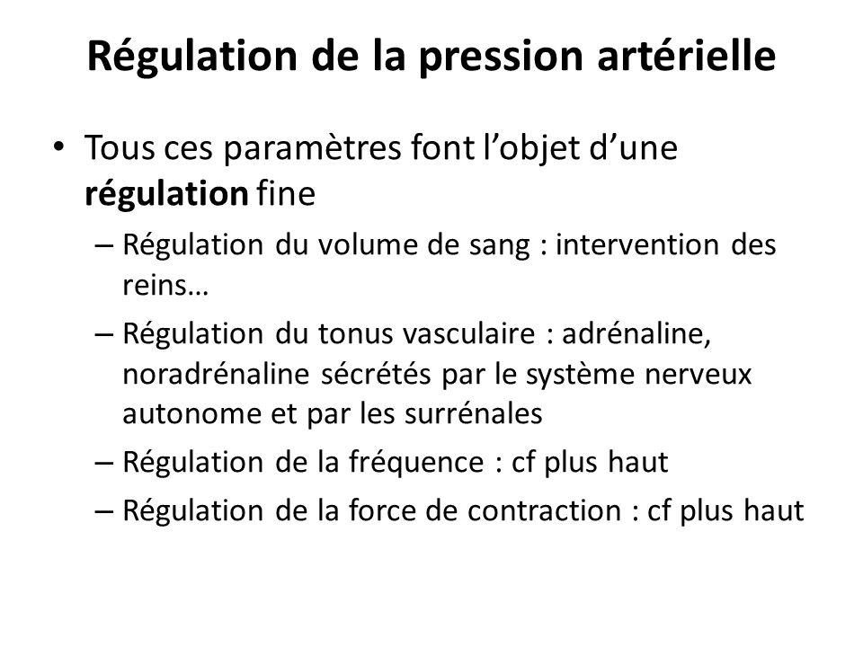 Régulation de la pression artérielle Tous ces paramètres font lobjet dune régulation fine – Régulation du volume de sang : intervention des reins… – R