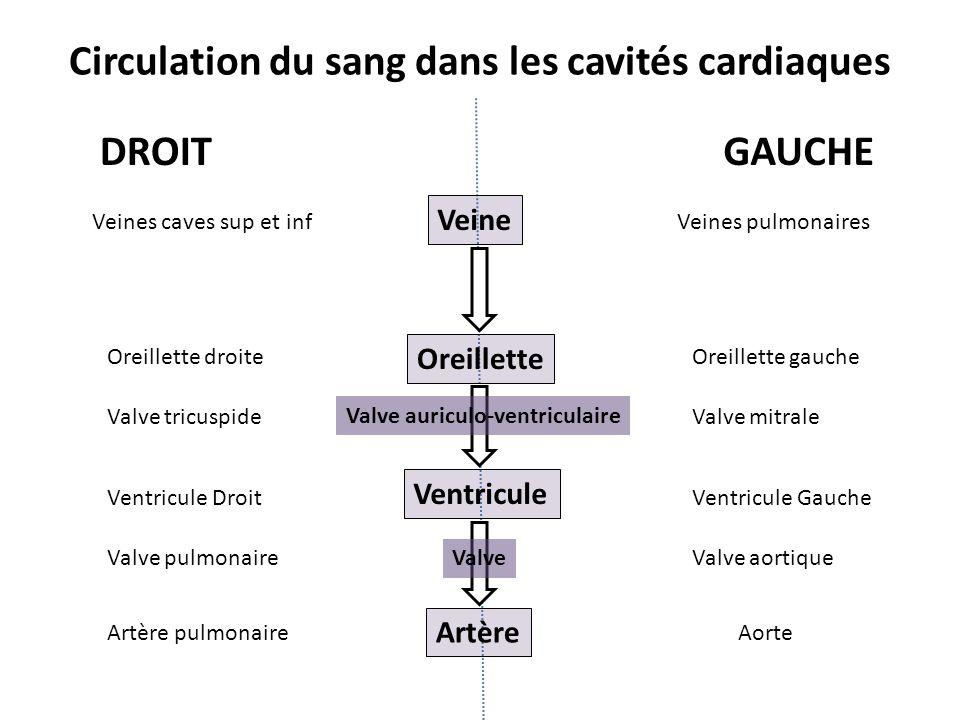 Oreillette Ventricule Artère Veine Valve auriculo-ventriculaire Valve DROITGAUCHE Veines caves sup et inf Oreillette droite Valve tricuspide Ventricul