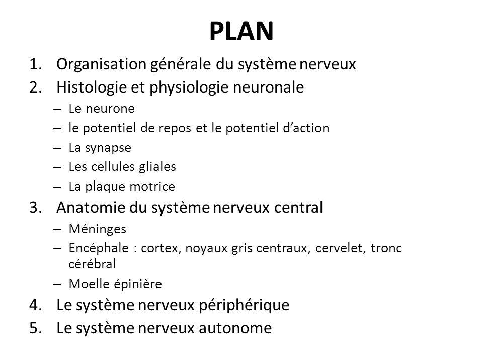 PLAN 1.Organisation générale du système nerveux 2.Histologie et physiologie neuronale – Le neurone – le potentiel de repos et le potentiel daction – L