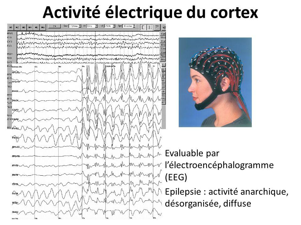 Activité électrique du cortex Evaluable par lélectroencéphalogramme (EEG) Epilepsie : activité anarchique, désorganisée, diffuse