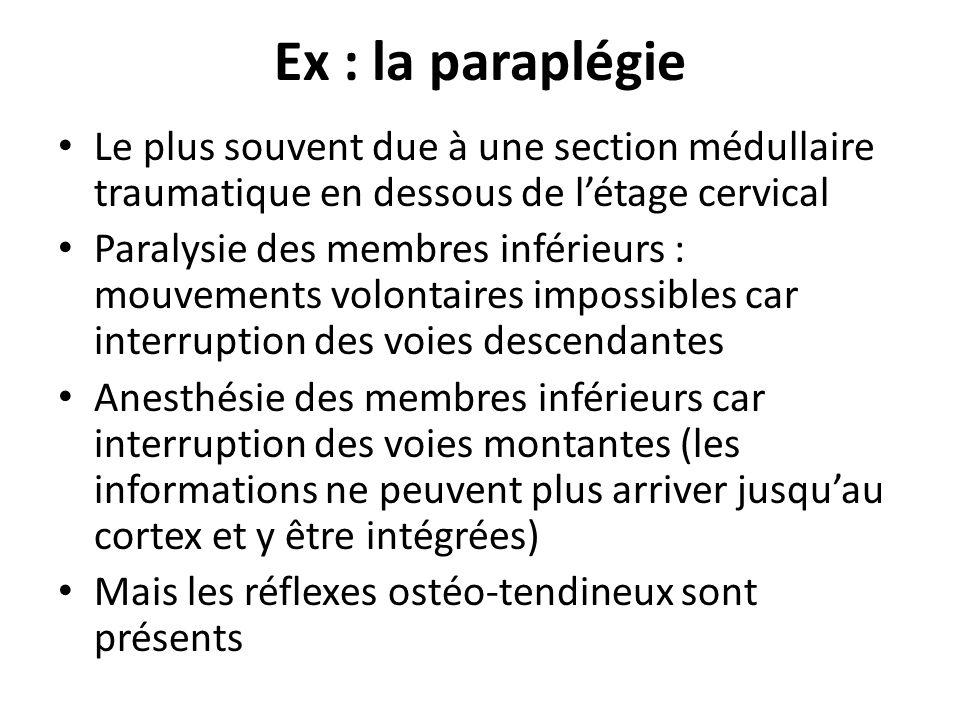 Ex : la paraplégie Le plus souvent due à une section médullaire traumatique en dessous de létage cervical Paralysie des membres inférieurs : mouvement