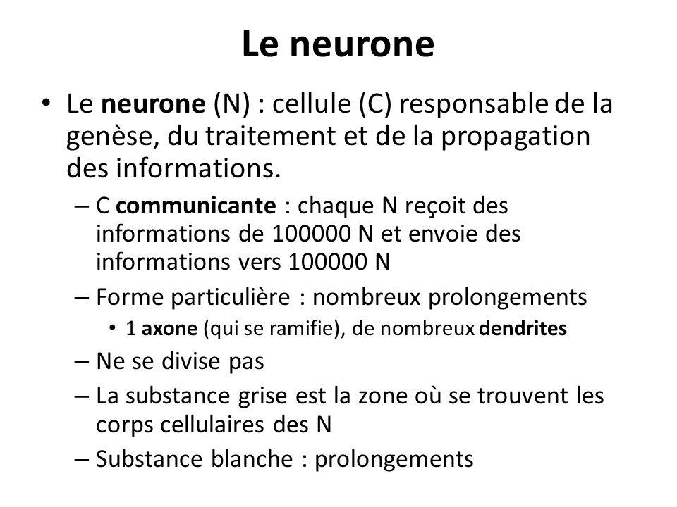 Le neurone Le neurone (N) : cellule (C) responsable de la genèse, du traitement et de la propagation des informations. – C communicante : chaque N reç