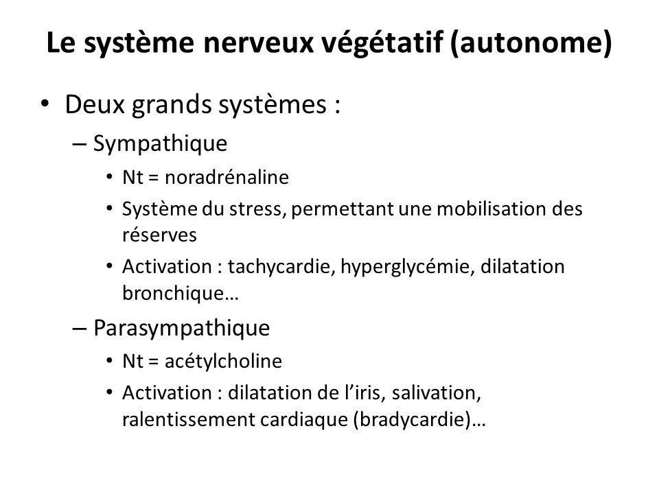 Le système nerveux végétatif (autonome) Deux grands systèmes : – Sympathique Nt = noradrénaline Système du stress, permettant une mobilisation des rés