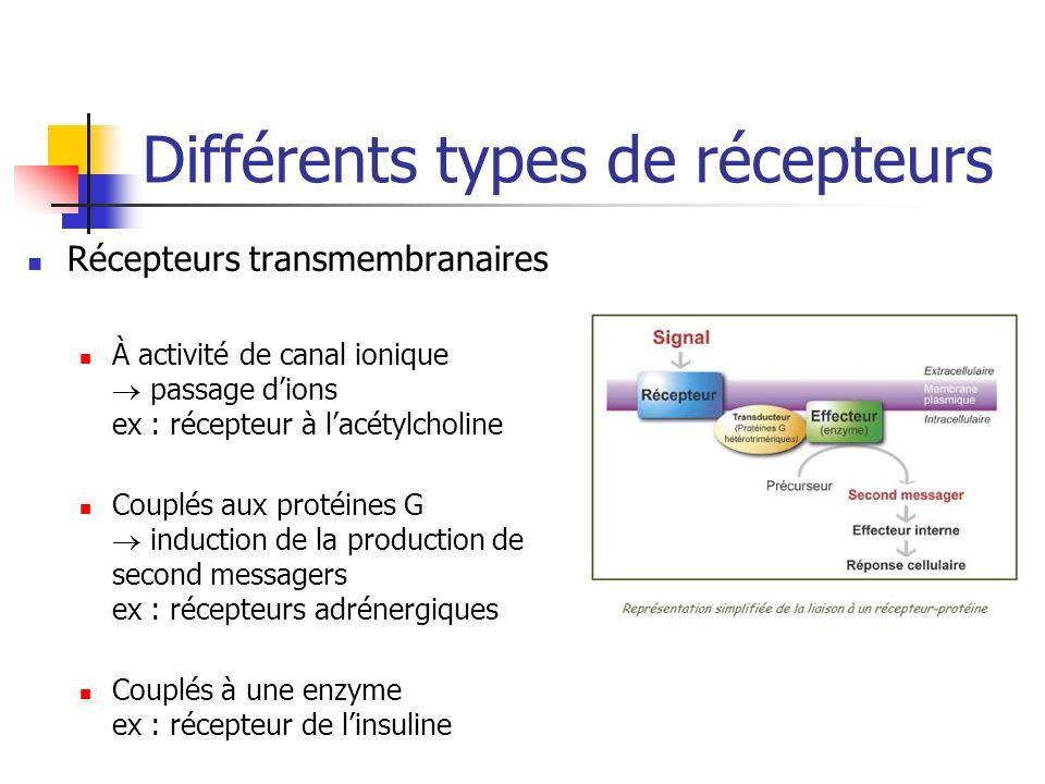 Différents types de récepteurs Récepteurs transmembranaires À activité de canal ionique passage dions ex : récepteur à lacétylcholine Couplés aux protéines G induction de la production de second messagers ex : récepteurs adrénergiques Couplés à une enzyme ex : récepteur de linsuline