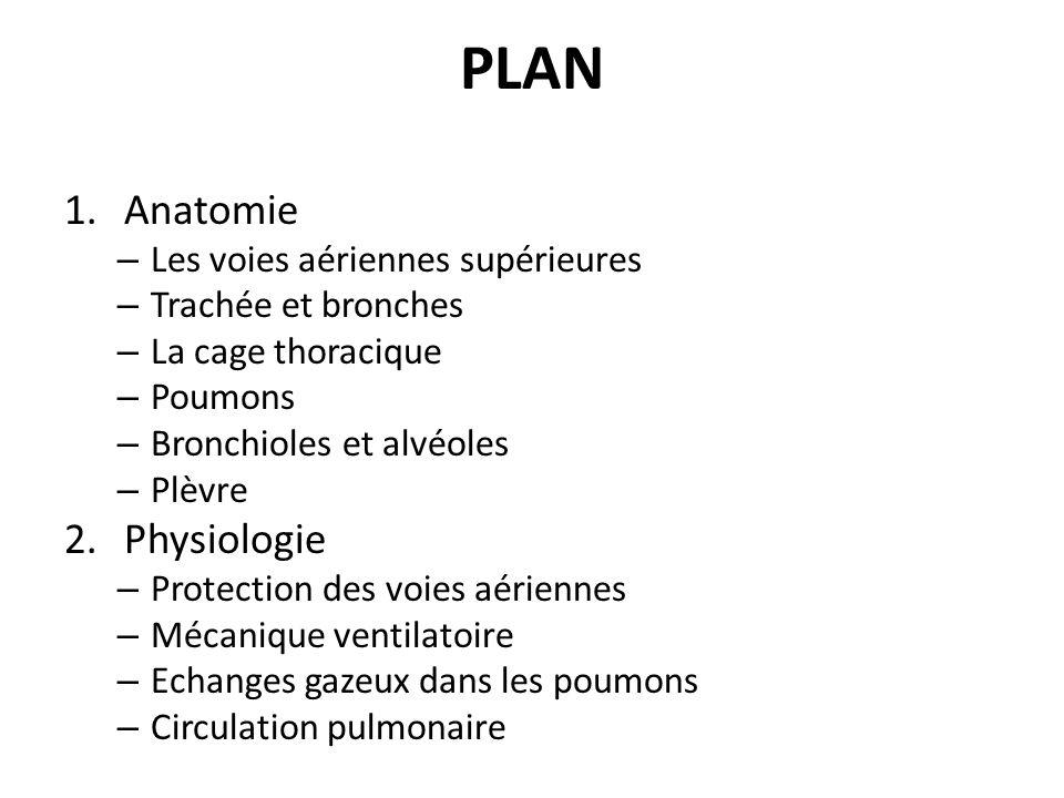 PLAN 1.Anatomie – Les voies aériennes supérieures – Trachée et bronches – La cage thoracique – Poumons – Bronchioles et alvéoles – Plèvre 2.Physiologi