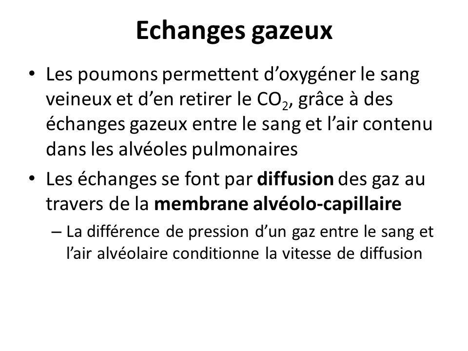 Echanges gazeux Les poumons permettent doxygéner le sang veineux et den retirer le CO 2, grâce à des échanges gazeux entre le sang et lair contenu dan
