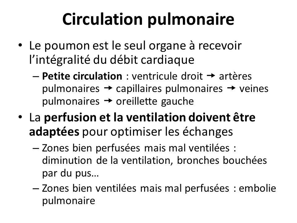 Circulation pulmonaire Le poumon est le seul organe à recevoir lintégralité du débit cardiaque – Petite circulation : ventricule droit artères pulmona