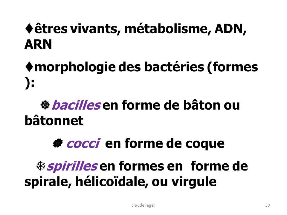 êtres vivants, métabolisme, ADN, ARN morphologie des bactéries (formes ): bacilles en forme de bâton ou bâtonnet cocci en forme de coque spirilles en