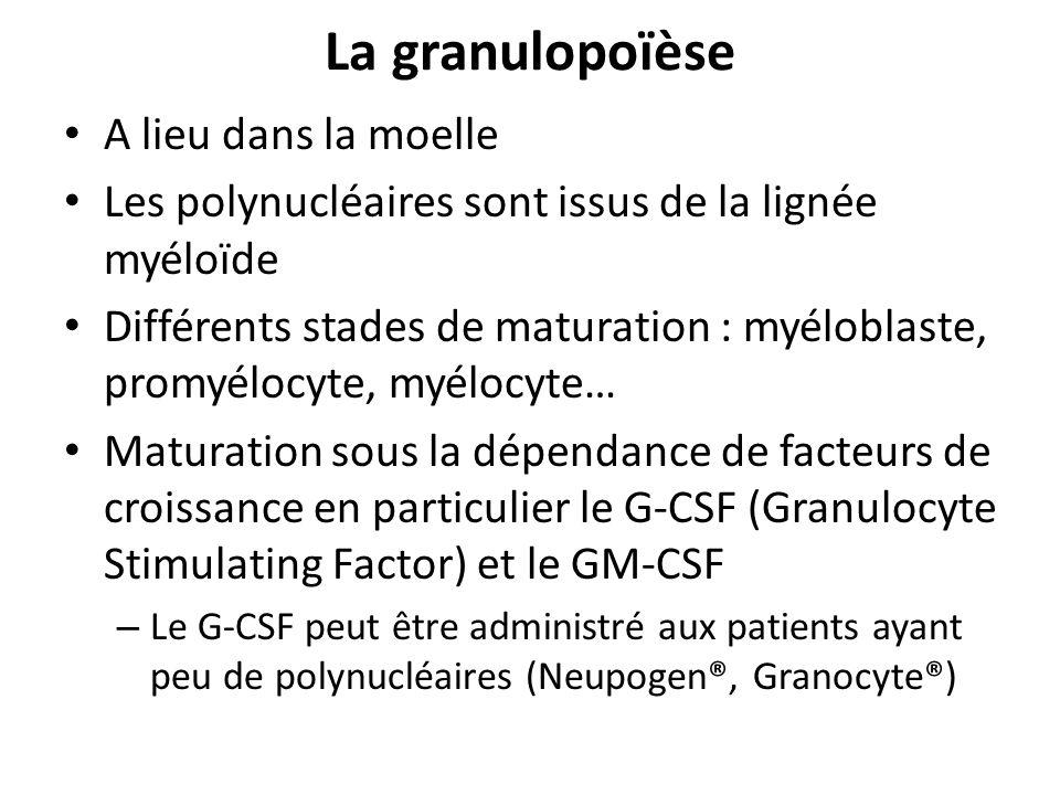 La granulopoïèse A lieu dans la moelle Les polynucléaires sont issus de la lignée myéloïde Différents stades de maturation : myéloblaste, promyélocyte