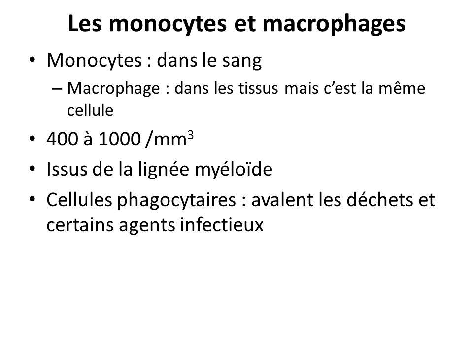 Les monocytes et macrophages Monocytes : dans le sang – Macrophage : dans les tissus mais cest la même cellule 400 à 1000 /mm 3 Issus de la lignée myé