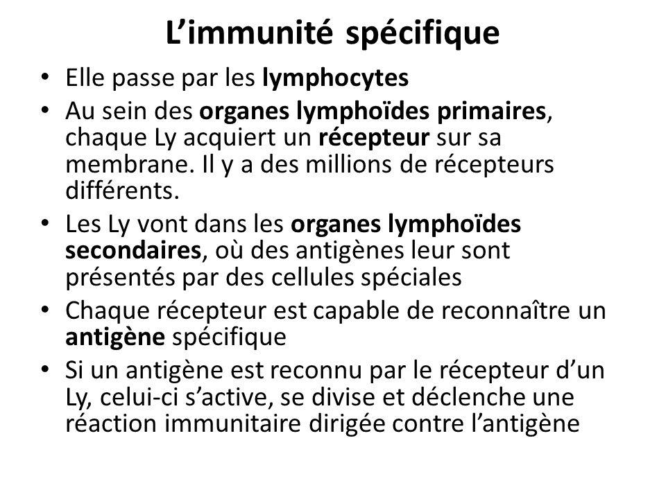 Limmunité spécifique Elle passe par les lymphocytes Au sein des organes lymphoïdes primaires, chaque Ly acquiert un récepteur sur sa membrane. Il y a