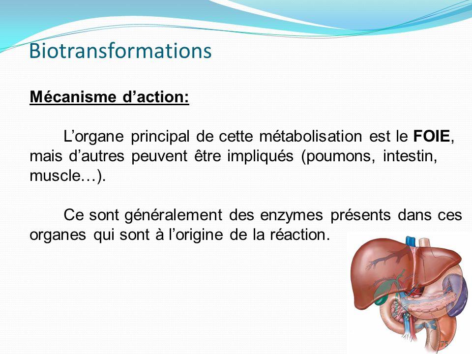 Mécanisme daction: Lorgane principal de cette métabolisation est le FOIE, mais dautres peuvent être impliqués (poumons, intestin, muscle…). Ce sont gé
