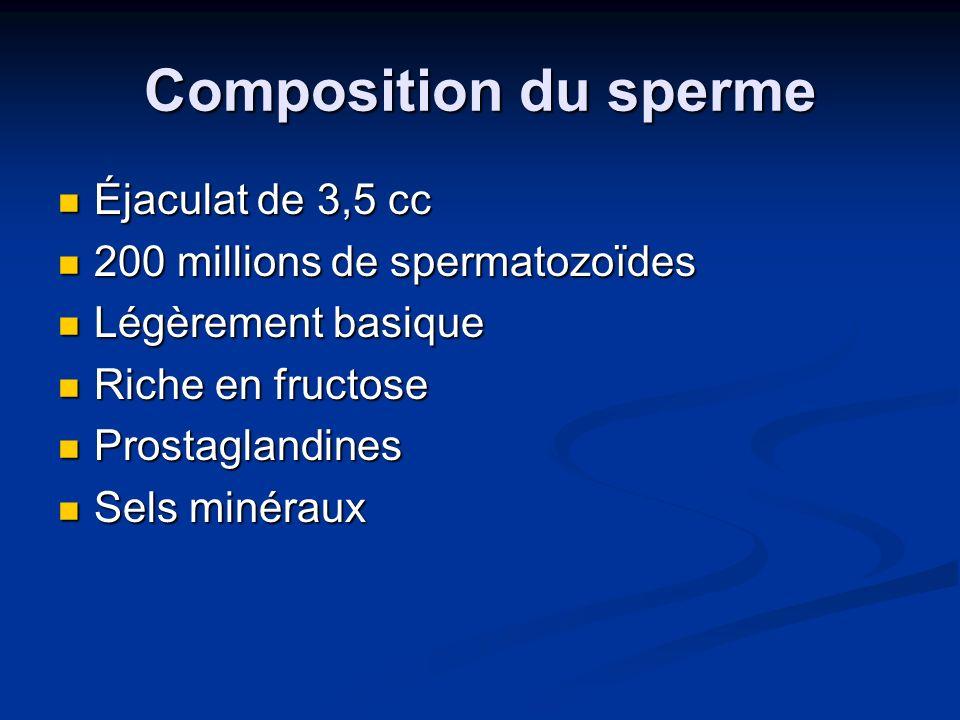 Composition du sperme Éjaculat de 3,5 cc Éjaculat de 3,5 cc 200 millions de spermatozoïdes 200 millions de spermatozoïdes Légèrement basique Légèremen