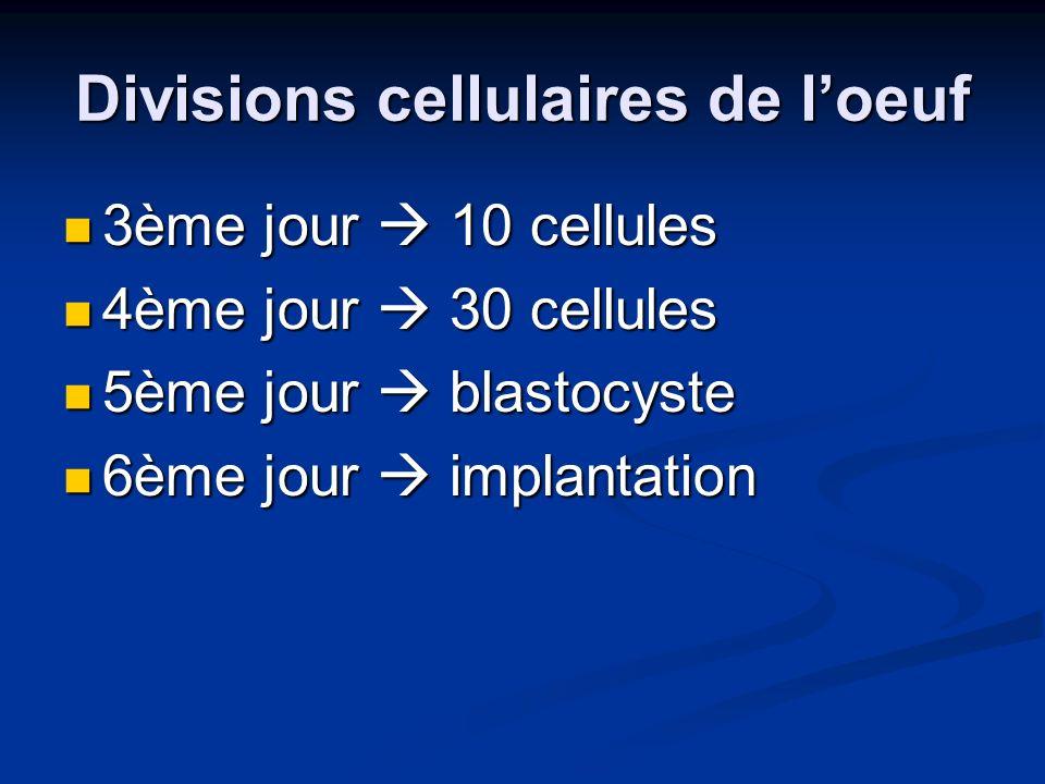 Divisions cellulaires de loeuf 3ème jour 10 cellules 3ème jour 10 cellules 4ème jour 30 cellules 4ème jour 30 cellules 5ème jour blastocyste 5ème jour