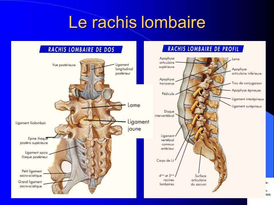 Protection éléments nerveux Cône terminal de la moelle épinière et queue de cheval – Périnée Plexus du membre inférieur – Innervation sensitive et motrice Nerf sciatique