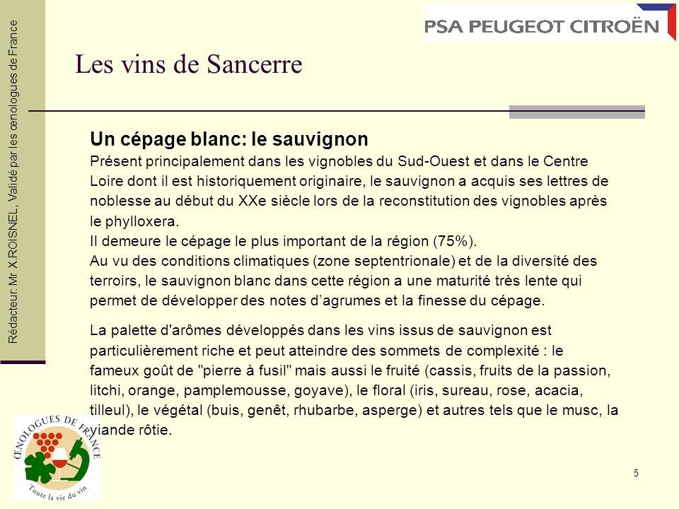 5 Les vins de Sancerre Un cépage blanc: le sauvignon Présent principalement dans les vignobles du Sud-Ouest et dans le Centre Loire dont il est histor