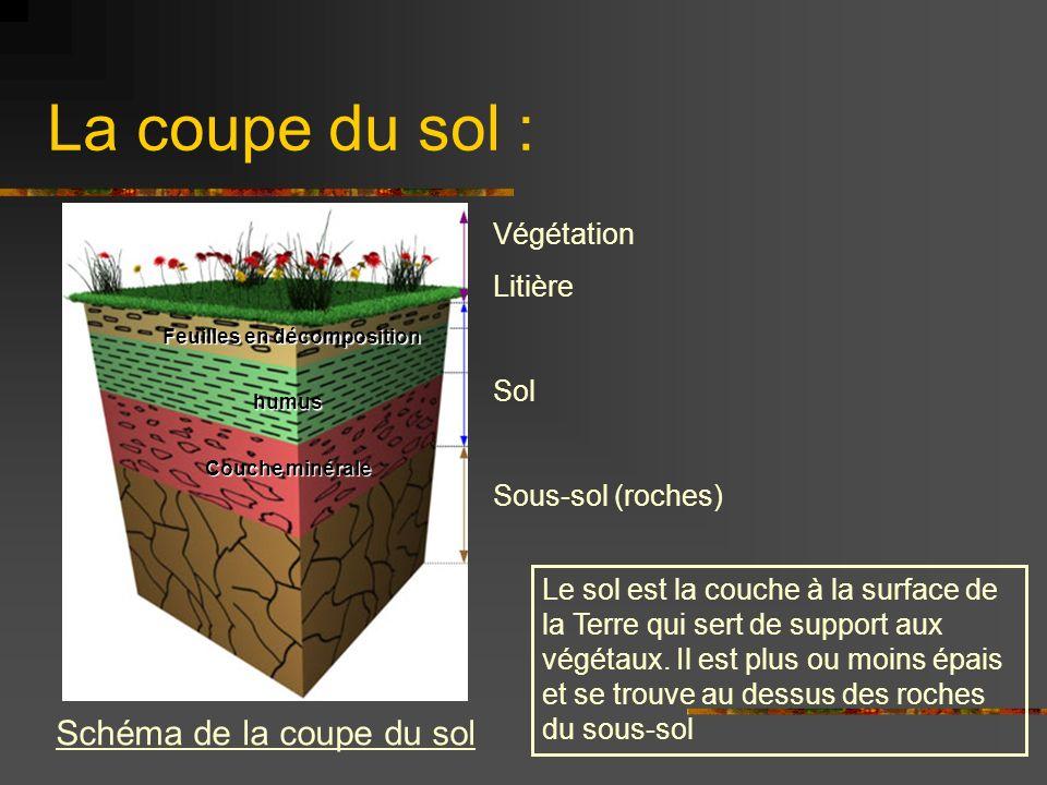 La coupe du sol : Végétation Litière Sol Sous-sol (roches) Schéma de la coupe du sol Feuilles en décomposition humus Couche minérale Le sol est la couche à la surface de la Terre qui sert de support aux végétaux.