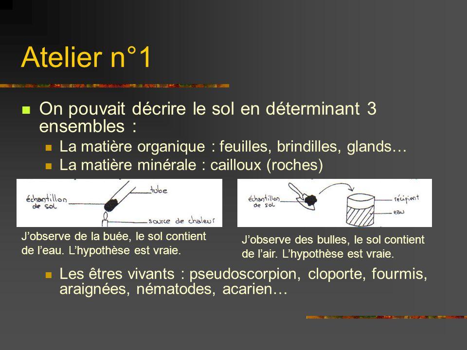Atelier n°1 On pouvait décrire le sol en déterminant 3 ensembles : La matière organique : feuilles, brindilles, glands… La matière minérale : cailloux