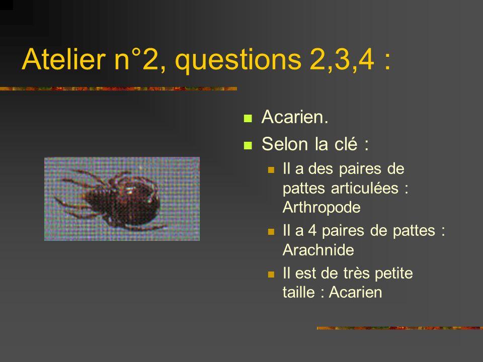 Atelier n°2, questions 2,3,4 : Acarien. Selon la clé : Il a des paires de pattes articulées : Arthropode Il a 4 paires de pattes : Arachnide Il est de