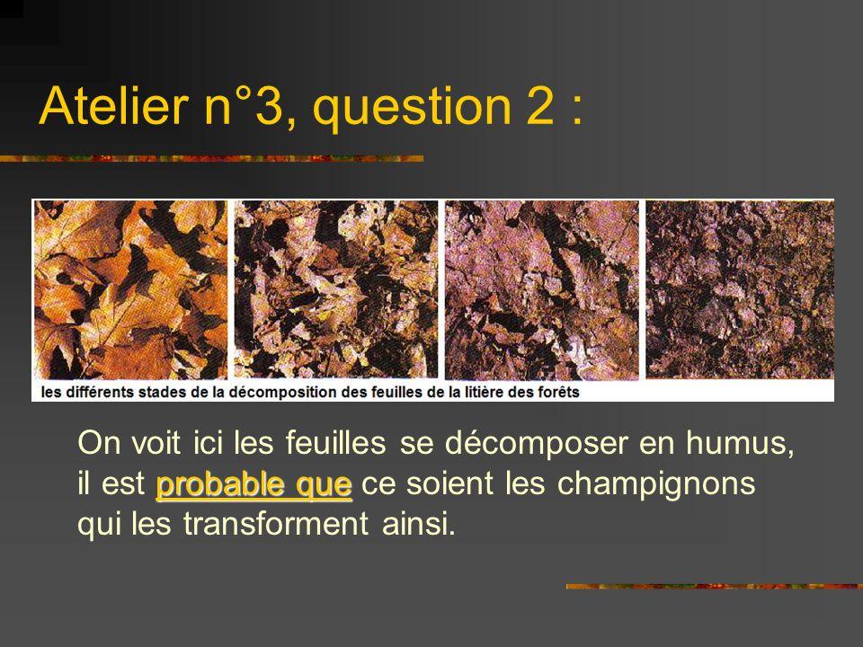 Atelier n°3, question 2 : probable que On voit ici les feuilles se décomposer en humus, il est probable que ce soient les champignons qui les transfor