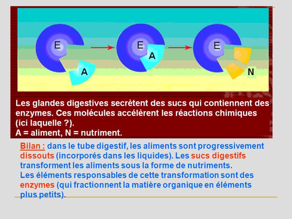 Bilan : dans le tube digestif, les aliments sont progressivement dissouts (incorporés dans les liquides). Les sucs digestifs transforment les aliments