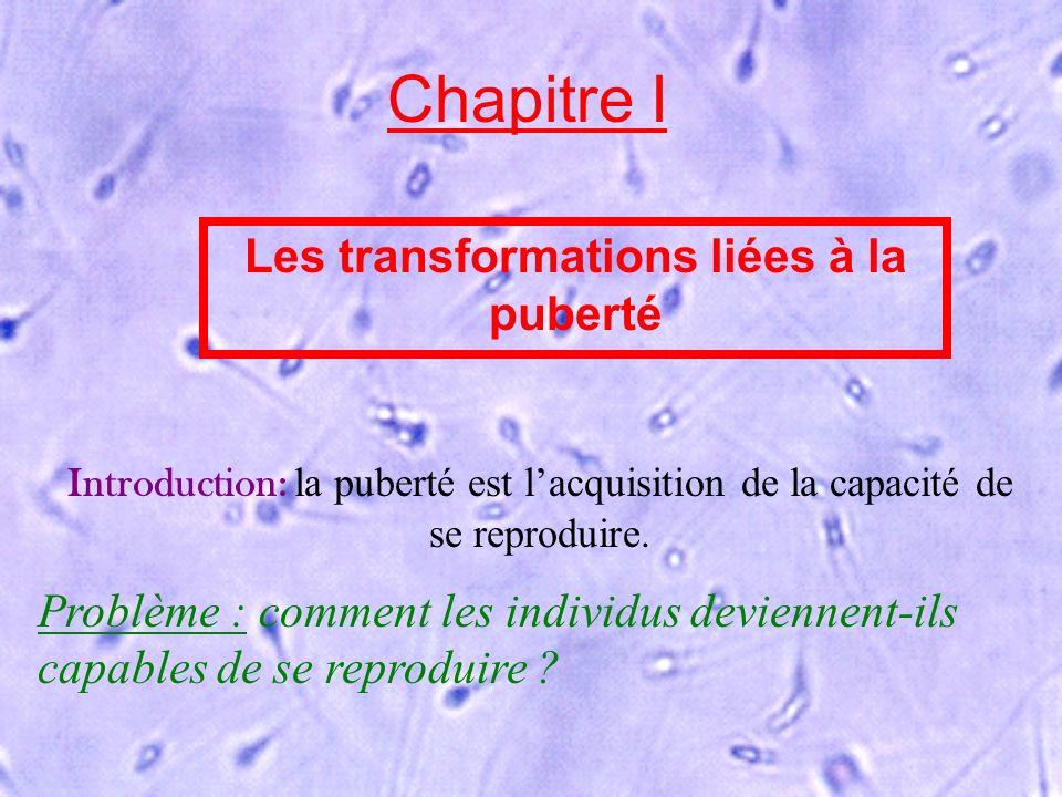 Chapitre I Les transformations liées à la puberté Introduction: la puberté est lacquisition de la capacité de se reproduire. Problème : comment les in