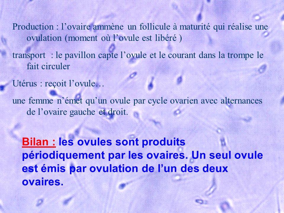 Bilan : les ovules sont produits périodiquement par les ovaires. Un seul ovule est émis par ovulation de lun des deux ovaires. Production : lovaire am