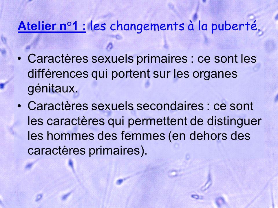 Atelier n°1 : les changements à la puberté. Caractères sexuels primaires : ce sont les différences qui portent sur les organes génitaux. Caractères se