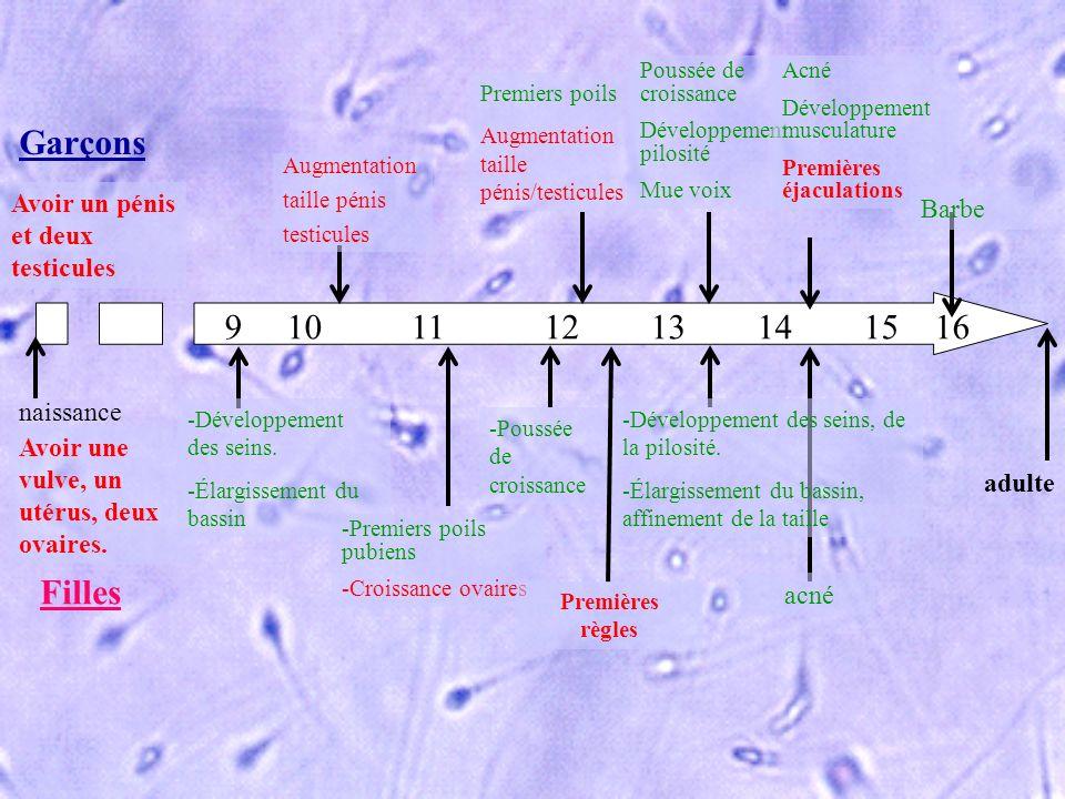 naissance adulte Augmentation taille pénis testicules Premiers poils Augmentation taille pénis/testicules Poussée de croissance Développement pilosité