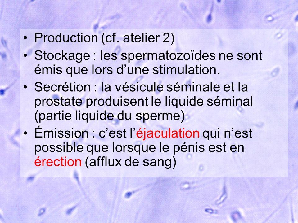 Production (cf. atelier 2) Stockage : les spermatozoïdes ne sont émis que lors dune stimulation. Secrétion : la vésicule séminale et la prostate produ