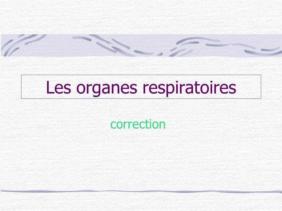 Les organes respiratoires correction