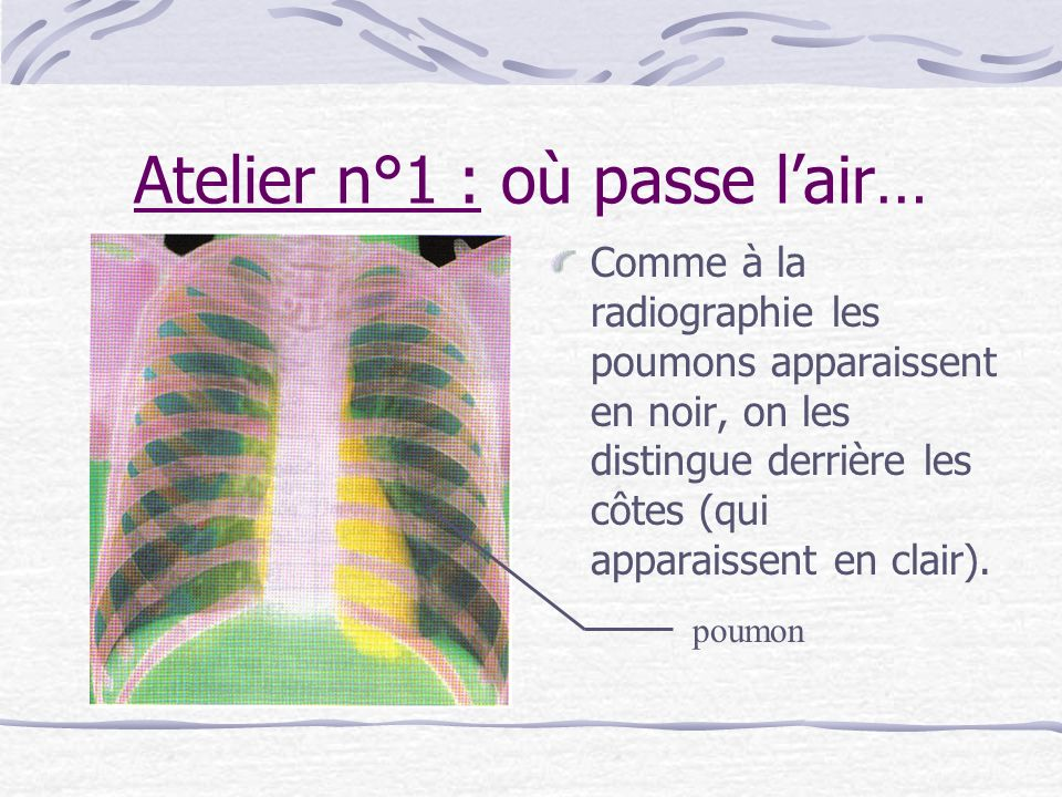 Atelier n°1 : où passe lair… Comme à la radiographie les poumons apparaissent en noir, on les distingue derrière les côtes (qui apparaissent en clair)