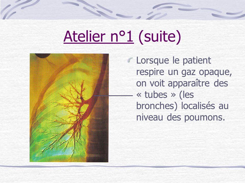 Atelier n°1 (suite) Lorsque le patient respire un gaz opaque, on voit apparaître des « tubes » (les bronches) localisés au niveau des poumons.