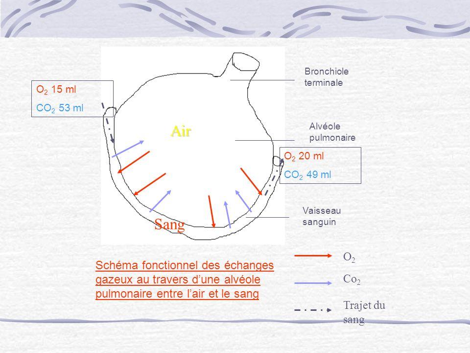 Bronchiole terminale Alvéole pulmonaire Vaisseau sanguin Air Sang O 2 Co 2 Schéma fonctionnel des échanges gazeux au travers dune alvéole pulmonaire e