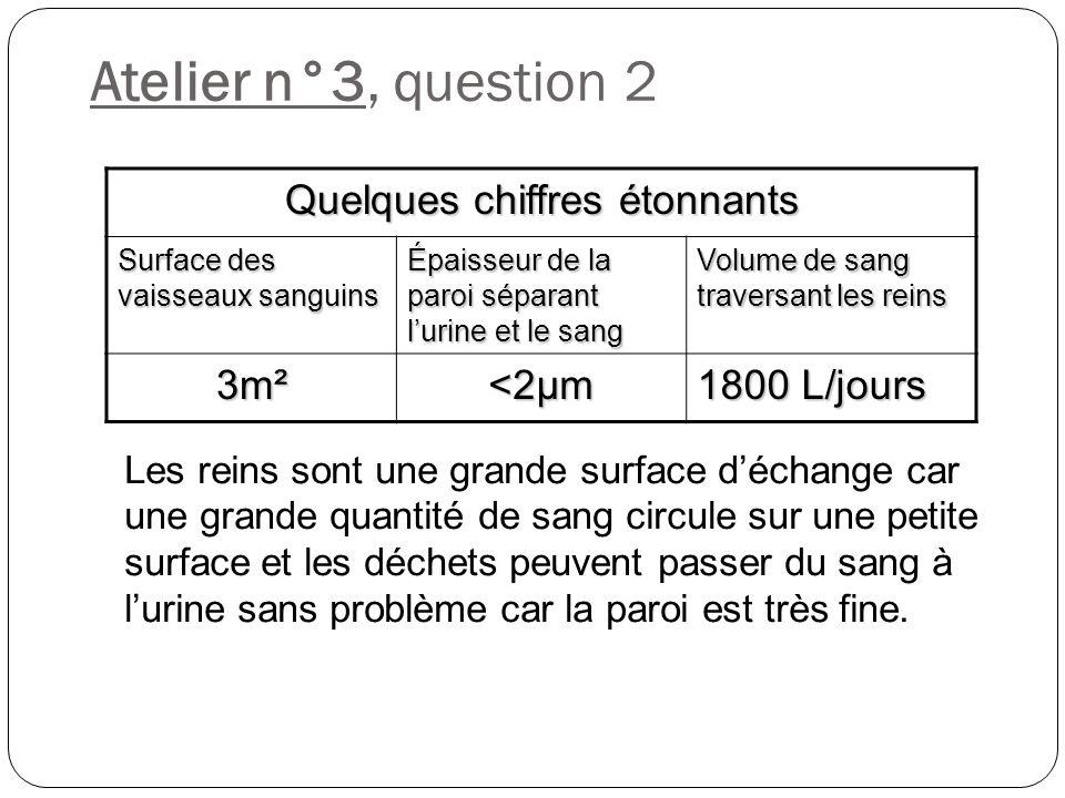 Atelier n°3, question 2 Les reins sont une grande surface déchange car une grande quantité de sang circule sur une petite surface et les déchets peuve