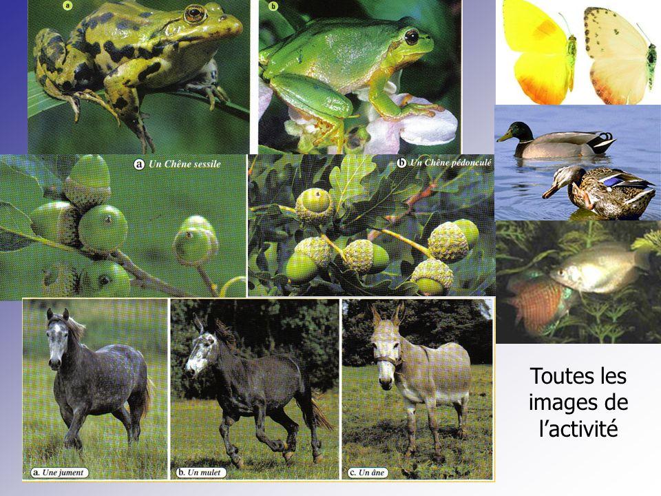 Comment définir lespèce (1) Pour être de la même espèce il faut se ressembler et pouvoir se reproduire.